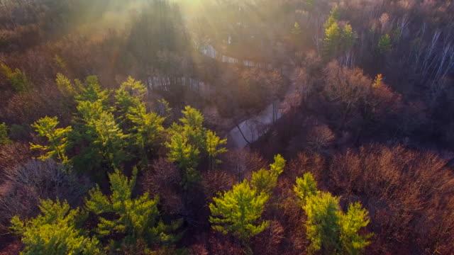 vidéos et rushes de lever du soleil dans le secret de la vallée de la rivière brumeux - vallée
