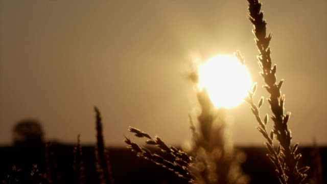 Sunrise on a beautiful morning meadow. video