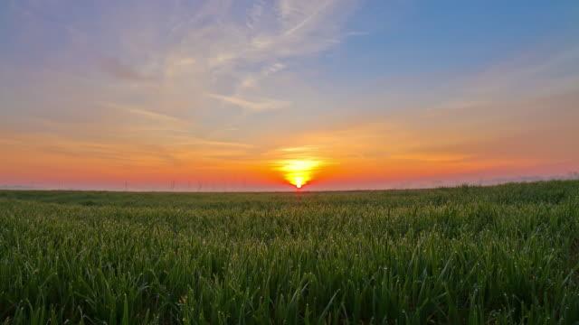 HD TIME-LAPSE: Puesta de sol sobre un campo de trigo - vídeo