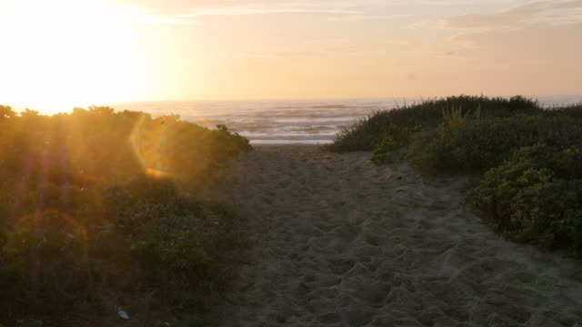 Sunrise Over Beach Dune with Flare on the left video