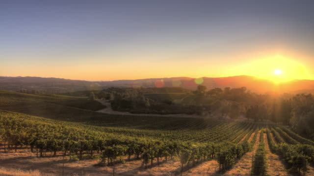 sunrise over california vineyard - california video stock e b–roll