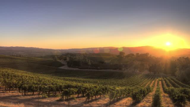 sunrise over california vineyard - grape stock videos & royalty-free footage