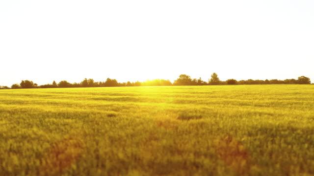 Sunrise over field video