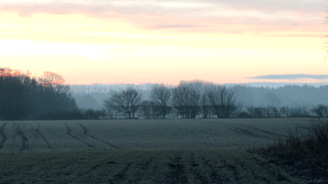 Sunrise over misty grove video