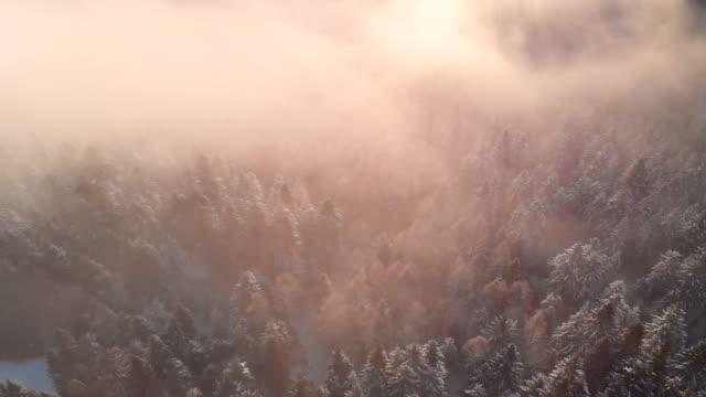 sonnenaufgang über snowy forest im winter. - schneeflocke sonnenaufgang stock-videos und b-roll-filmmaterial