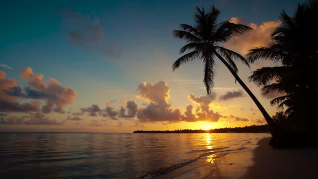 Sunrise over tropical island beach and palm tree Punta Cana video