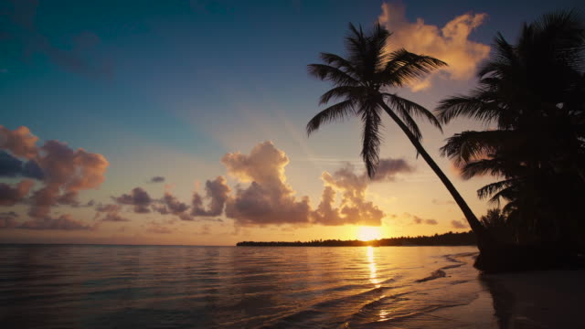Sunrise over tropical island beach, caribbean sea and beautiful green palm trees video