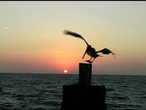 Sunrise Pelican 1 video