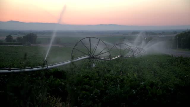 sunrise sprinkler (4k) - bewässerungsanlage stock-videos und b-roll-filmmaterial