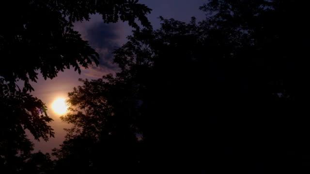 Sunrise Through Trees Time-Lapse video