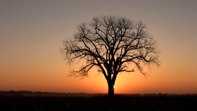 Sunrise tree. video