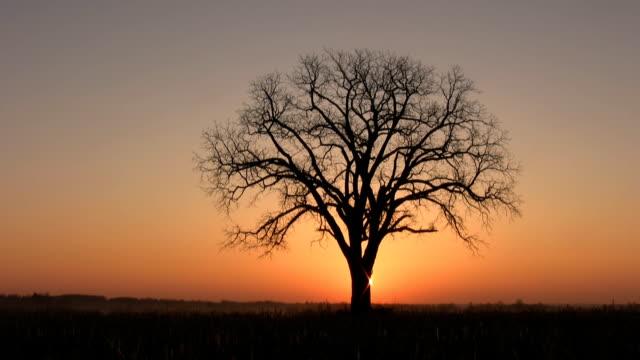 sunrise albero. - albero spoglio video stock e b–roll