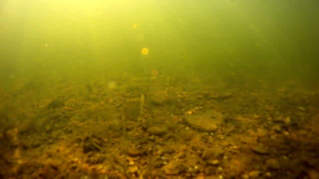 sunrise unterwasser - sonnenbarsch stock-videos und b-roll-filmmaterial