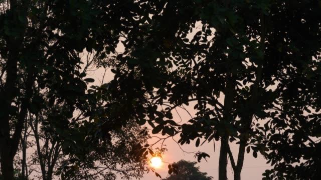 4k tl: sunrise. - saftig stock-videos und b-roll-filmmaterial