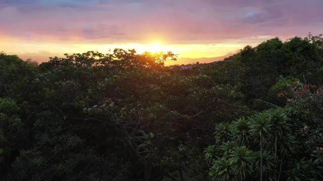 vidéos et rushes de coucher du soleil à travers la vallée centrale - plantation