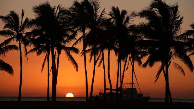sunset アゲインストの木、ボート、水上 - ハワイ点の映像素材/bロール