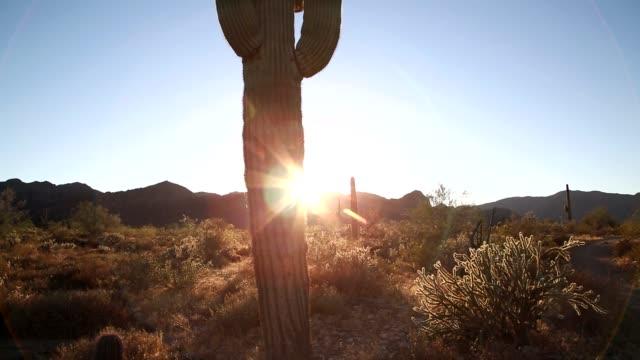 Sunset and The Saguaro Cactus