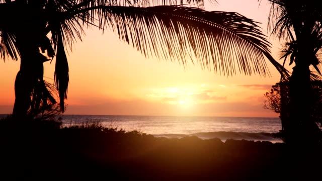 zachód słońca na plaży z bezpośrednim słońce i dłoń drzewa - palm tree filmów i materiałów b-roll