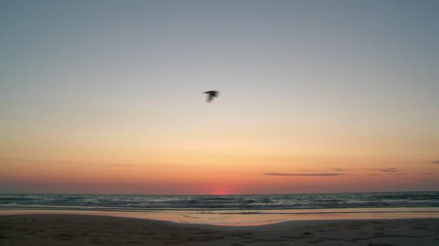 HD :「ケーブルビーチの夕暮れ ビデオ