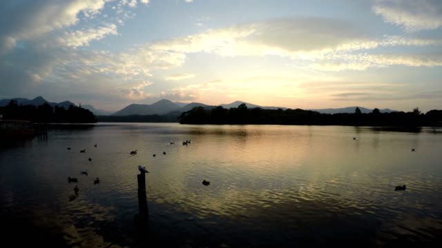 Sunset at lake with sea birds and ducks swimming in the water video