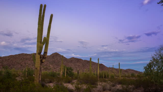 Sunset at Saguaro National Monument video