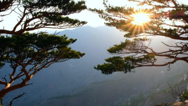sonnenuntergang am ulsanbawi, seoraksan-nationalpark, south korea - kiefernwäldchen stock-videos und b-roll-filmmaterial