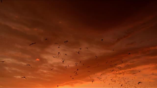 Sunset Bats video