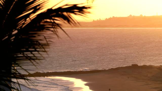 sunset beach with palm tree on the island in 4k slow motion - palm tree filmów i materiałów b-roll