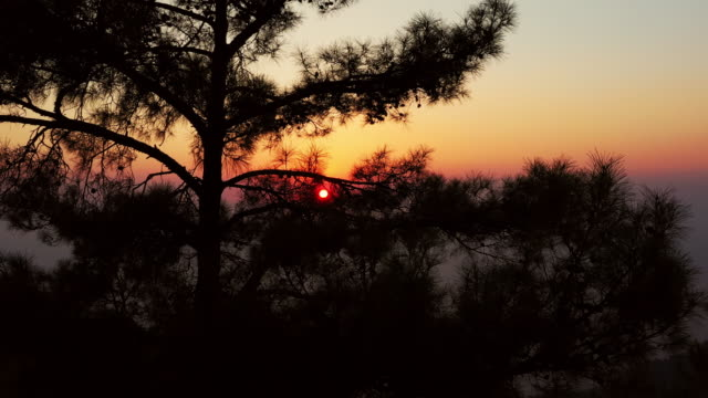 sunset behind the tree - conifera video stock e b–roll