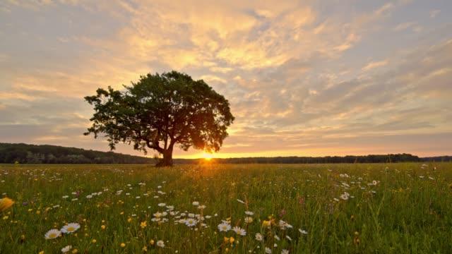 ms sunset bakom lugna, idylliska landsbygdens landskap med träd och blommor, slovenien - vild blomma bildbanksvideor och videomaterial från bakom kulisserna