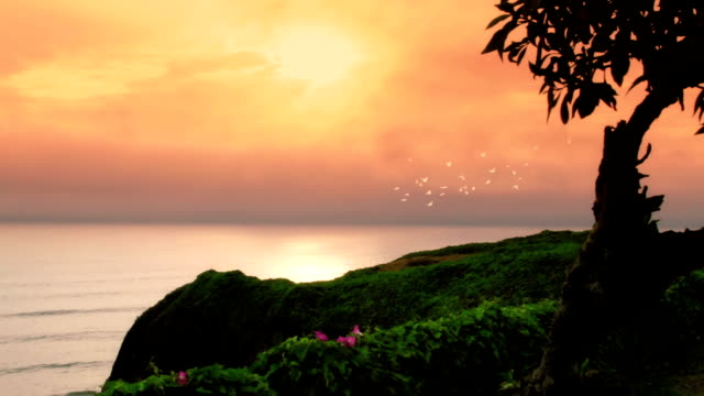 Sunset birds video