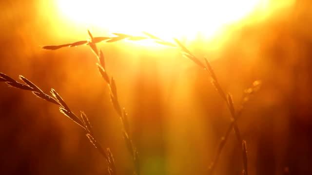 해질녘까지 패스티발 잔디 - 초점 이동 스톡 비디오 및 b-롤 화면