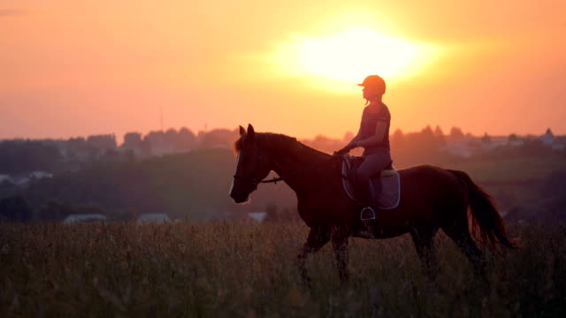 sunset field with a stallion and a jockey girl riding it - sella video stock e b–roll