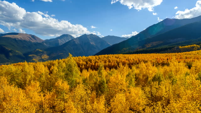 Sunset Golden Valley - A time-lapse video of Autumn sunset view of a dense colorful aspen grove in a mountain valley at base of steep peaks of Sawatch Range. Leadville, Colorado, USA.
