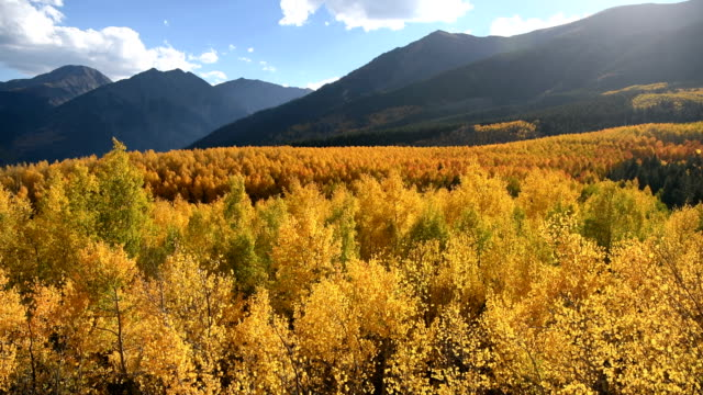 Sunset Golden Valley - An Autumn sunset video of light wind stirring up a dense colorful aspen grove in a mountain valley at base of steep peaks of Sawatch Range. Twin Lakes, Leadville, Colorado, USA.