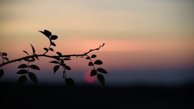 秋カルパティアの畑で夕日 - イヌバラ点の映像素材/bロール