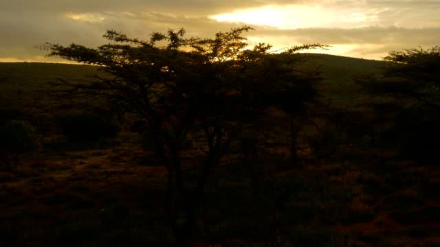 vídeos de stock e filmes b-roll de antena: pôr do sol de áfrica - quénia