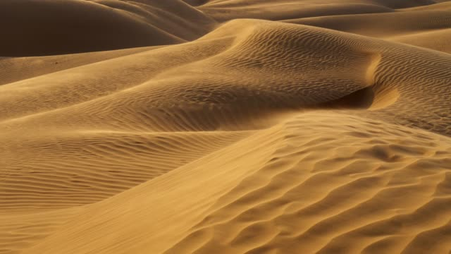 Sunset in desert. Sand is waving in the wind in sandy dunes in a desert. The dunes are covered with folds.  UHD