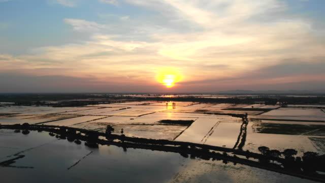 sunset in environment at thailand - pole ryżowe filmów i materiałów b-roll
