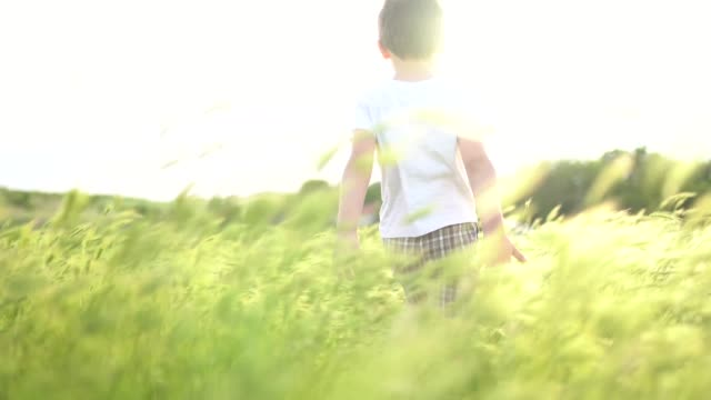 Sunset in grass field: Small boy walking in grass field waving his hands