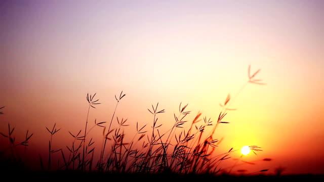 sunset in nature - haryana video stock e b–roll