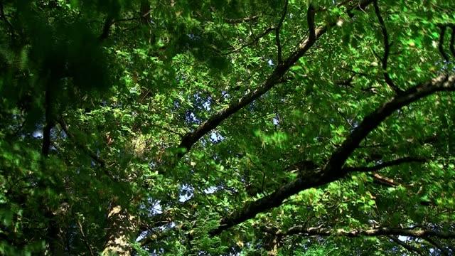 закат в дуб - дубовый лес стоковые видео и кадры b-roll