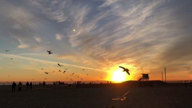 Zonsondergang in Santa Monica Californië met vliegende meeuwen video