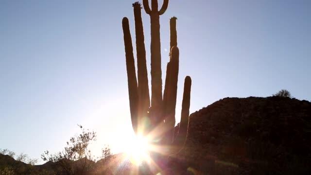 砂漠の夕日 - オコティロサボテン点の映像素材/bロール