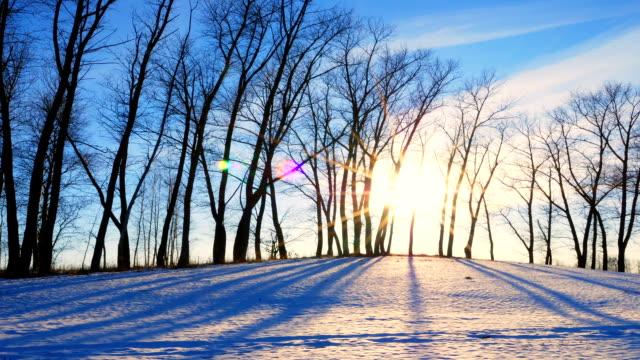 vídeos de stock, filmes e b-roll de pôr-do-sol na floresta de inverno - bétula