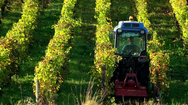 sunset landscape, tractor in bordeaux wineyard france, europe nature - azienda vinivola video stock e b–roll