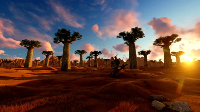 sonnenuntergang auf afrikanischer landschaft mit baobab-baum - savanne stock-videos und b-roll-filmmaterial