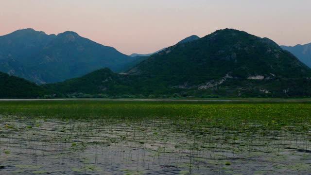 Sunset on Lake Skadar. Plantation of water lilies video