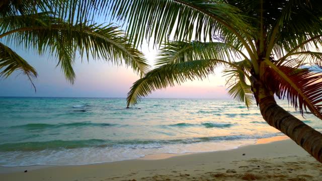 solnedgång på stranden och havet med coconut palm tree - idyllisk bildbanksvideor och videomaterial från bakom kulisserna