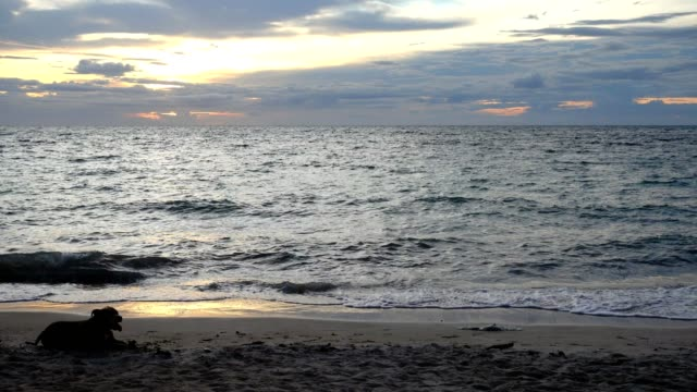 Sunset on the beach at Koh Tao in Suratthani, Thailand video